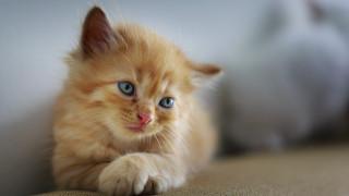 Είναι επίσημο: Οι γάτες μπορούν να κολλήσουν κορωνοϊό από τους ανθρώπους
