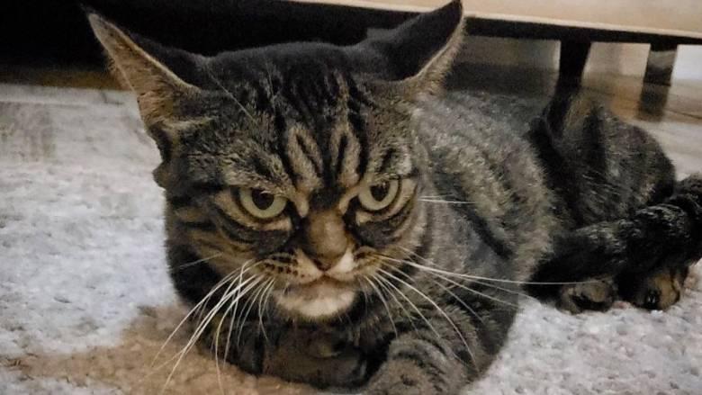 Αυτή είναι η πιο... μουτρωμένη γάτα του κόσμου