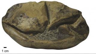 Ανταρκτική: Βρέθηκε απολίθωμα τεράστιου αυγού ηλικίας... 66 εκατομμυρίων ετών