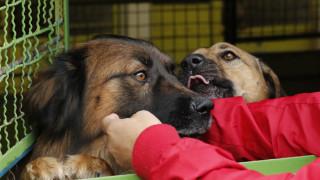 Ποιοι σκύλοι κινδυνεύουν να πάθουν θερμοπληξία το καλοκαίρι;