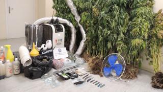 Ασπρόπυργος: Δύο συλλήψεις για φυτεία κάνναβης σε αγροικία