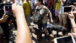 Ξεκίνησε, παρά τις αντιδράσεις, το ετήσιο φεστιβάλ κατανάλωσης κρέατος σκύλου στην Κίνα