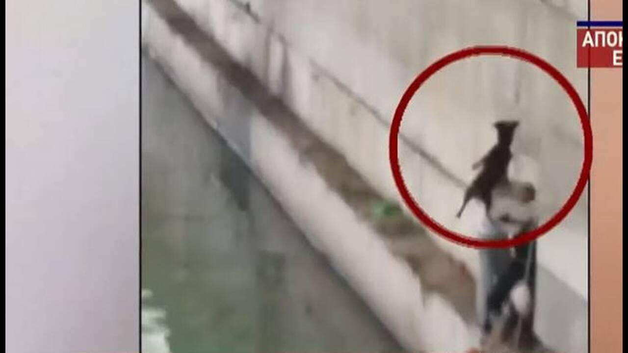 https://cdn.cnngreece.gr/media/news/2020/06/23/224450/photos/snapshot/dog_rescue1.JPG
