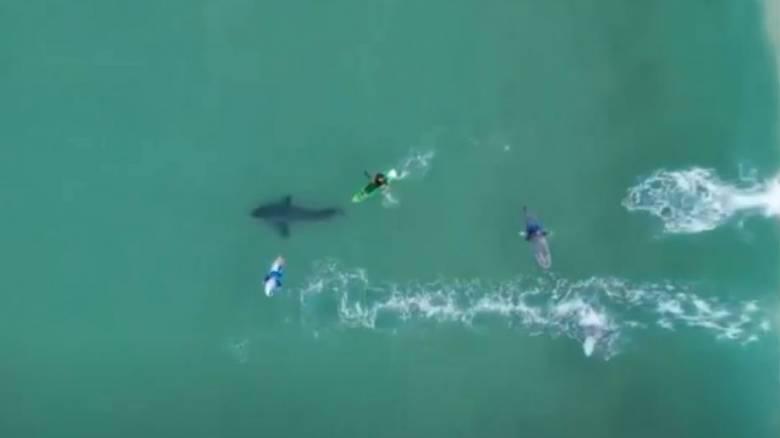 Βίντεο από αέρος δείχνει την ανατριχιαστική «συνάντηση» σέρφερ με λευκό καρχαρία