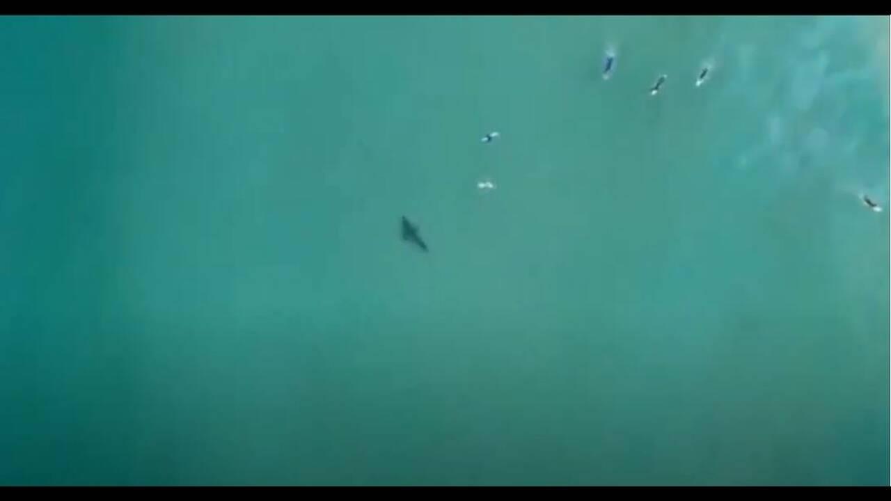 https://cdn.cnngreece.gr/media/news/2020/06/25/224735/photos/snapshot/shark1.JPG