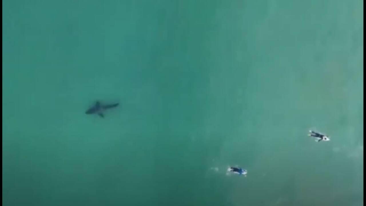 https://cdn.cnngreece.gr/media/news/2020/06/25/224735/photos/snapshot/shark5.JPG