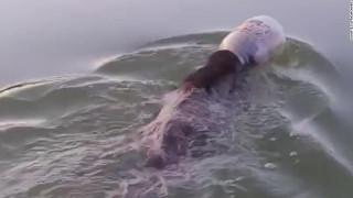 Εντυπωσιακή διάσωση αρκούδας που είχε σφηνωθεί σε πλαστικό δοχείο