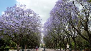 Ο δήμος Αθηναίων καλεί και φέτος του πολίτες να «υιοθετήσουν» ένα νεοφυτεμένο δέντρο