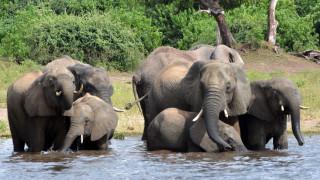 Μυστήριο με το θάνατο εκατοντάδων ελεφάντων στη Μποτσουάνα