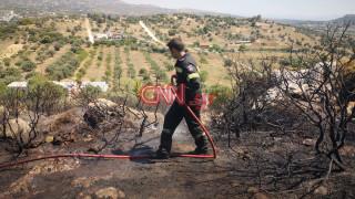 Φωτιά στα Σπάτα: Οι πρώτες εικόνες από το σημείο