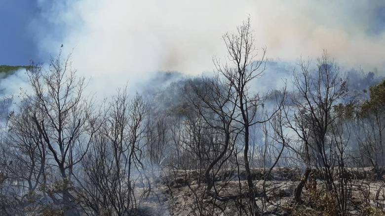 Πυρκαγιά στην Αρκαδία