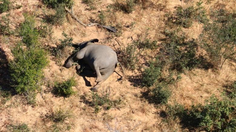 Μποτσουάνα: Συγκλονίζουν οι εικόνες με τους εκατοντάδες νεκρούς ελέφαντες