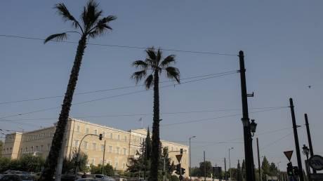 Μεγάλος Περίπατος της Αθήνας: Η οδός Πανεπιστημίου γέμισε με φοίνικες