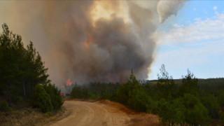 Τουρκία: Μεγάλη δασική πυρκαγιά μαίνεται στη χερσόνησο της Καλλίπολης