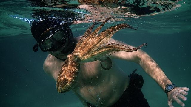 My Octopus Teacher 03