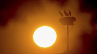 Copernicus: Ο περσινός και ο φετινός Ιούνιος ήταν οι πιο ζεστοί που έχουν καταγραφεί ποτέ