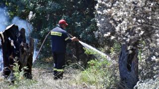 Εθνικό Αστεροσκοπείο: Νέα όρια για την εκτίμηση της επικινδυνότητας των δασικών πυρκαγιών