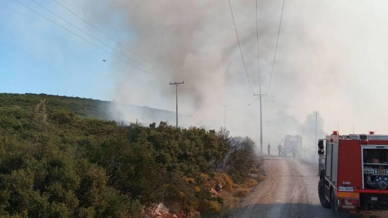 Φωτιά στον Ασπρόπυργο: Ισχυρές πυροσβεστικές δυνάμεις στο σημείο