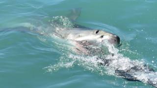 Τραγωδία στην Αυστραλία: Πέθανε 15χρονος από επίθεση καρχαρία