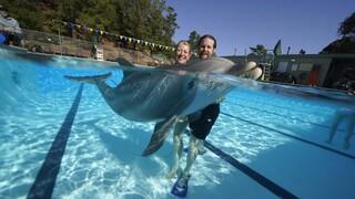 Ρομπότ - δελφίνια: Μήπως είναι η λύση στην αιχμαλωσία σε θάλασσια πάρκα;