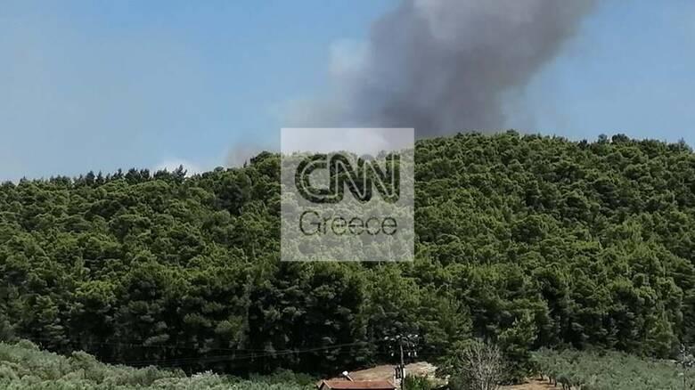 Λαμία: Μαίνεται η φωτιά στο Θεολόγο Φθιώτιδας