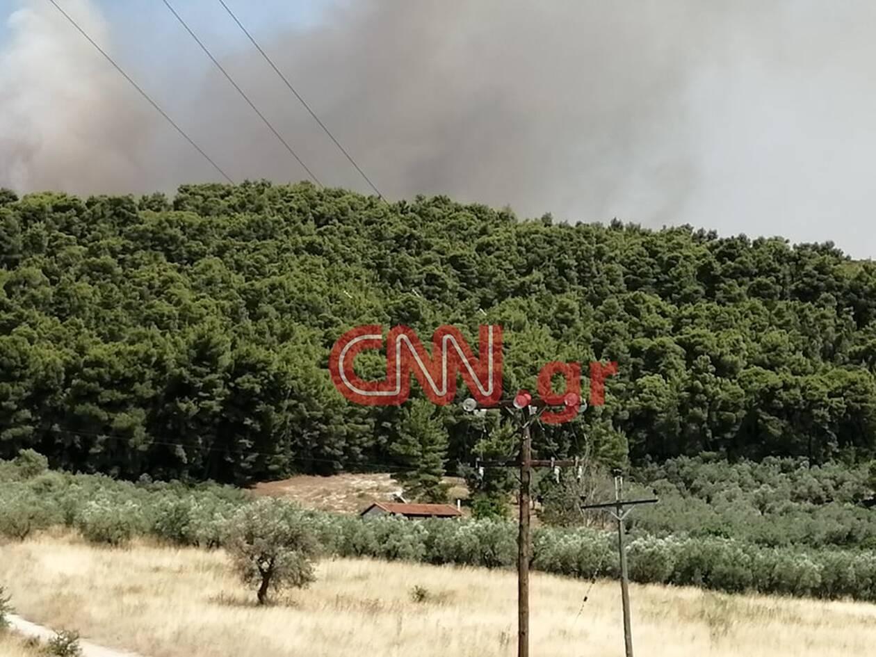 https://cdn.cnngreece.gr/media/news/2020/07/16/227452/photos/snapshot/fotia3.jpg