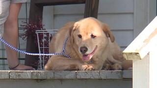 ΗΠΑ: Σκύλος που αγνοείτο για μέρες έκανε 80 χιλιόμετρα για να επιστρέψει στο... παλιό του σπίτι