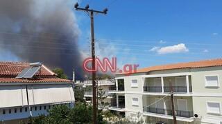 Μεγάλη φωτιά στην Κορινθία: Ισχυρές δυνάμεις στο σημείο - Εκκενώθηκαν οικισμοί