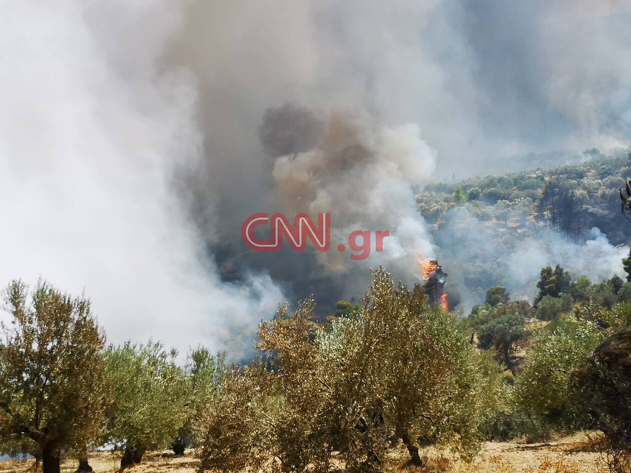 https://cdn.cnngreece.gr/media/news/2020/07/23/228311/photos/snapshot/115894657_573331493356763_5399458088161474473_n.jpg