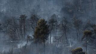 «Πυρά» ΣΥΡΙΖΑ κατά κυβέρνησης για τη φωτιά στις Κεχριές