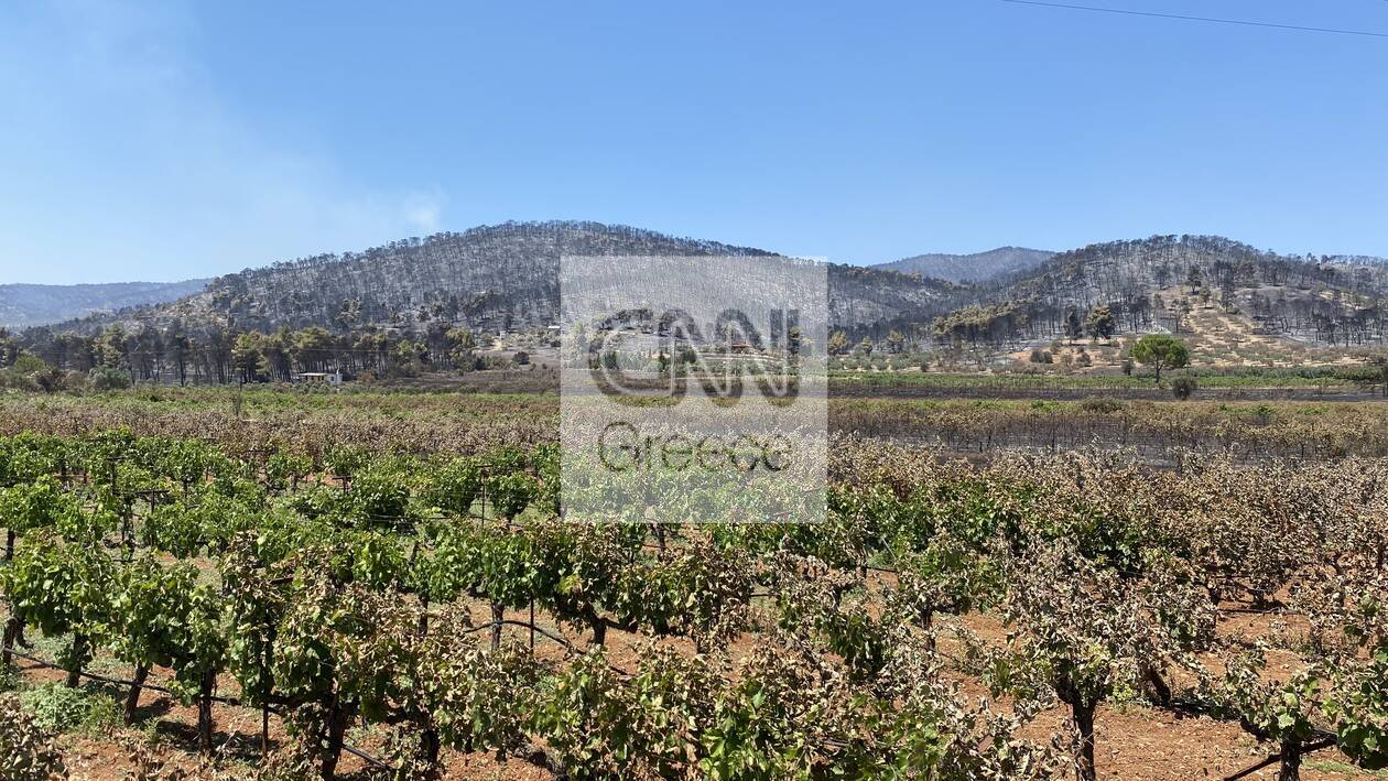 https://cdn.cnngreece.gr/media/news/2020/07/26/228645/photos/snapshot/5f1da79d1d064.jpg