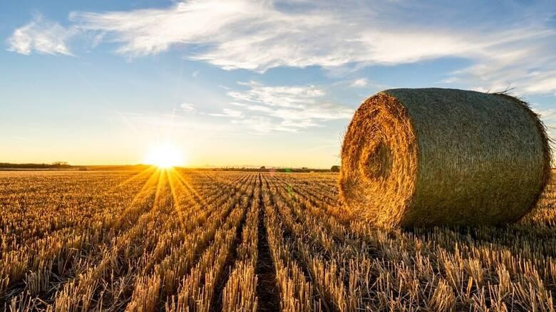 Ο θερισμός, η «γιορτή» των γεωργών και της ελληνικής υπαίθρου