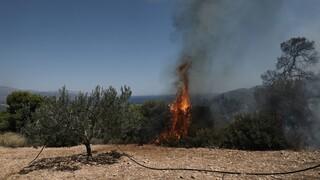 Συνολικά 63 πυρκαγιές εκδηλώθηκαν στη χώρα μας σε ένα 24ωρο