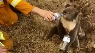 Αυστραλία: Τρία δισεκατομμύρια ζώα κάηκαν ή εκτοπίστηκαν στις φονικές πυρκαγιές