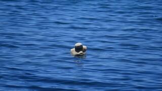 Καιρός: Καμίνι η χώρα την Παρασκευή - Στους 41 βαθμούς ο υδράργυρος