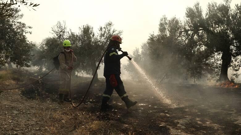 Υπό μερικό έλεγχο η πυρκαγιά στο Ναύπλιο