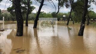 «Πρόκειται για την απόλυτη καταστροφή»: Τι λέει στο CNN Greece o δήμαρχος Διρφύων Μεσσαπίων