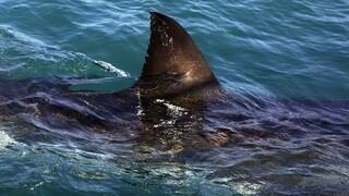 Γενναίος σύζυγος γρονθοκόπησε λευκό καρχαρία για να σώσει την γυναίκα του