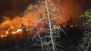 Φωτιά Κέρκυρα: Ολονύχτια μάχη με τις φλόγες - Εκατοντάδες στρέμματα δάσους καταστράφηκαν
