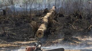 Η Βραζιλία καλεί Ντι Κάπριο να επισκεφτεί τον Αμαζόνιο