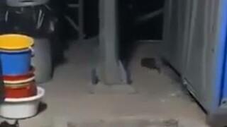Άθλιες συνθήκες καταγγέλλουν οι αστυνομικοί της Σάμου στο ΚΥΤ