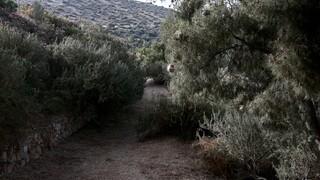 Συλλήψεις για εμπρησμό από πρόθεση σε δασική έκταση στον Υμηττό