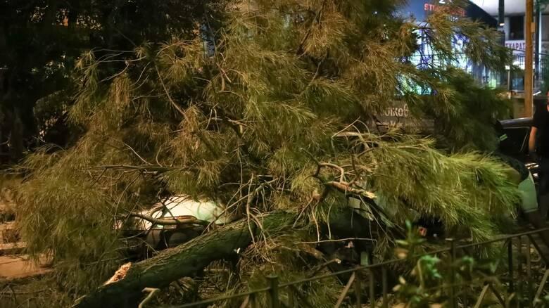 Χαλάνδρι: Δέντρο έπεσε πάνω σε περαστικό - Τραυματίστηκε σοβαρά στο κεφάλι