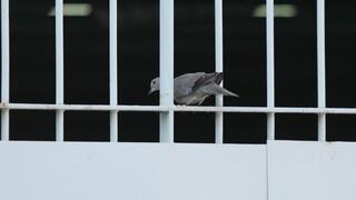 Φυλακές Κέρκυρας: Φωτογραφίες – ντοκουμέντο από τα ευρήματα της αιφνιδιαστικής έρευνας