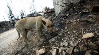 Θεσσαλονίκη: Μαζική δολοφονία ζώων στα Διαβατά