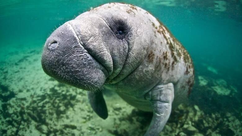 WWF: Η φύση καταρρέει - 68% μείωση πληθυσμών άγριας ζωής από το 1970