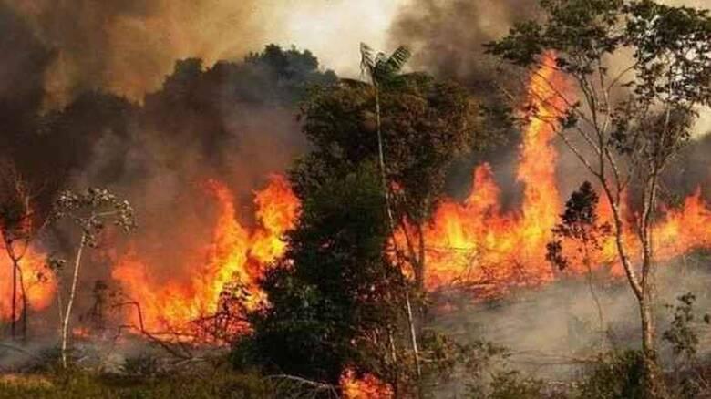 Στις φλόγες για όγδοη ημέρα τα δάση της Συρίας
