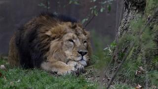 Έκθεση - κόλαφος της WWF: Τα δύο τρίτα της άγριας ζωής έχουν εξαφανιστεί μετά το 1970