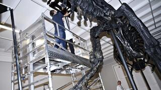 ΗΠΑ: Σε δημοπρασία ένας από τους μεγαλύτερους τυραννόσαυρους ρεξ ηλικίας 67 εκατ. ετών