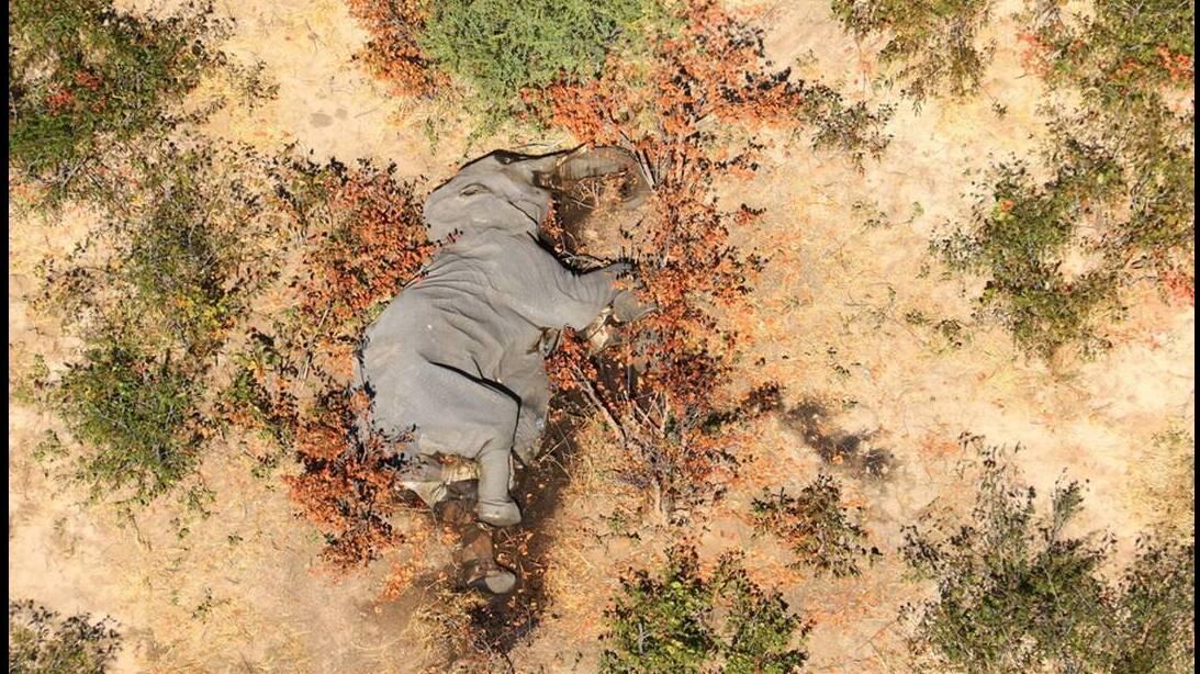 Πού οφείλονται τελικά οι πολλαπλοί μυστηριώδεις θάνατοι ελεφάντων στην Μποτσουάνα;